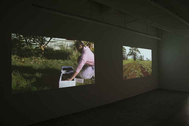 Matavai Taulangau, Pikilau, 2019, HD video and Matavai Taulangau, Polopolo, HD video (installation view). Image courtesy of Shaun Matthews.