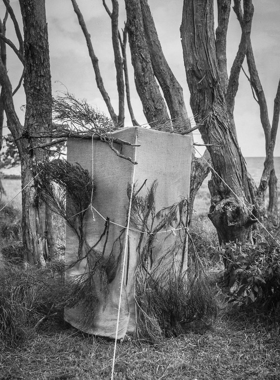 Kenneth Bigwood, 'Little Barrier Island. Bird Life. Hide erected at nest of Red- Fronted Parakeet in the bowl of a Kanuka tree, for photographic purposes.' [AAQT-6539-A20719], Black and white photograph, Dimensions variable, 1949, Copyright Archives New Zealand.