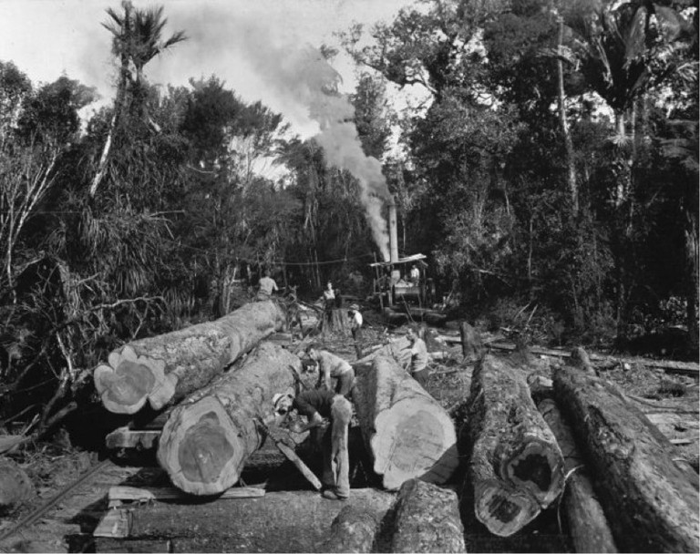 Northland bush scene, with kauri logs ready for transportation. Northwood album 4. Ref: PA1-q-180-044. Alexander Turnbull Library, Wellington, New Zealand. http://natlib.govt.nz/records/22766935. Permission of the Alexander Turnbull Library, Wellington, New Zealand, must be obtained before any reuse of this image.