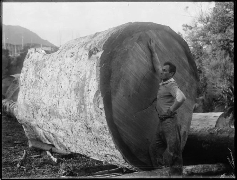 Man standing beside a kauri log, Herekino, Northland. Northwood brothers: Photographs of Northland. Ref: 1/1-004888-G. Alexander Turnbull Library, Wellington, New Zealand. http://natlib.govt.nz/records/22892421. Permission of the Alexander Turnbull Library, Wellington, New Zealand, must be obtained before any reuse of this image.