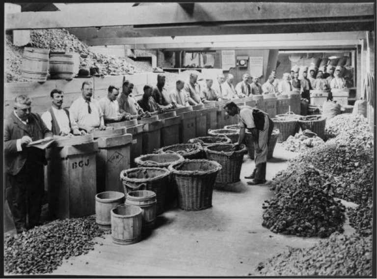 Sorting kauri gum at Michelson and Company, Auckland. Making New Zealand: Negatives and prints from the Making New Zealand Centennial collection. Ref: MNZ-0707-1/4-F. Alexander Turnbull Library, Wellington, New Zealand. http://natlib.govt.nz/records/23214653. Permission of the Alexander Turnbull Library, Wellington, New Zealand, must be obtained before any reuse of this image.