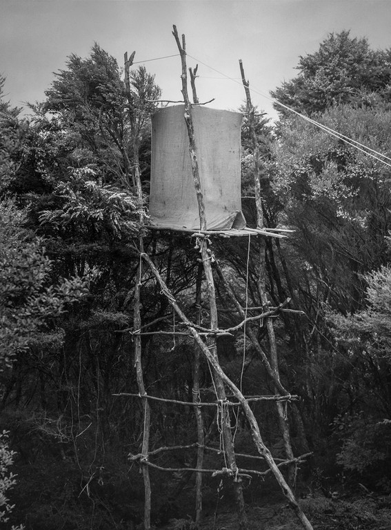 Kenneth Bigwood, 'Little Barrier Island. Bird Life. 25 ft. pylon hide erected for photographic purposes at a Tui's nest in the top-most branches of a Kanuka tree. This was the lowest Tui's nest found on Little Barrier Island.' [AAQT-6539-A20717], Black and white photograph, Dimensions variable, 1949, Copyright Archives New Zealand.